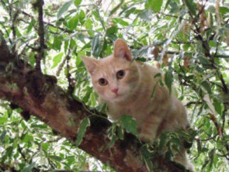 Skelbimas - Kačių ir dronų iškėlimas iš medžių