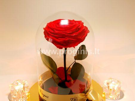 Skelbimas - Mieganti rožė