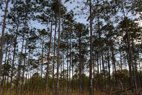 Sausra nualino miškus – uogų ir grybų galime nebesitikėti