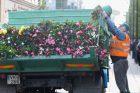 Laisvės alėja – jau be gėlių