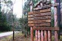A. Matučio eilės išskobtos medyje Dubravos miške.