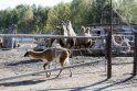 Klaipėda turi zoologijos sodą