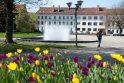 Pranašas: fontanas Steigiamojo Seimo aikštėje kviečia vasarą.