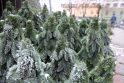 Rotušės aikštė – ant išskirtinių švenčių ir šou slenksčio (programa)
