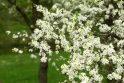 Kauno botanikos sode – žiedų viliotinis