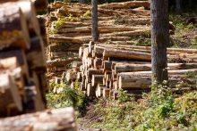 Ministras nemato reikalo miškų pirkimo saugikliams