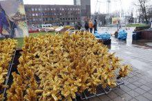 Naujovė: Atgimimo aikštėje atsiras net 100 eglučių