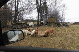 Gyvūnų globėjai prašo pagalbos