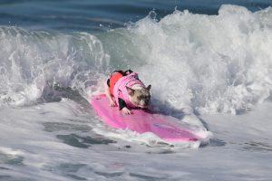 Kalifornijoje bangas skrodė šunys