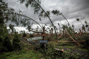 Audros išverstus medžius Lenkija tvarkys net dvejus metus