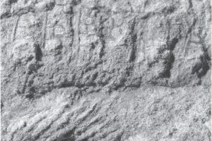 Seniausias Žemės gyvis pavadintas autobuso vairuotojo vardu (foto)