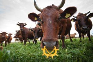 Nesaikingas antibiotikų vartojimas atneša tik nuostolius