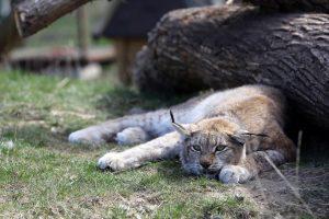 Nuobodžiaujantiems zoologijos sodo gyvūnams galite padėti ir jūs