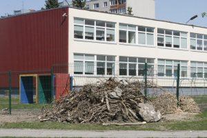 Prie darželių šalinami menkaverčiai medžiai