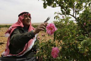Karas Sirijoje kelia grėsmę legendinėms Damasko rožėms