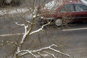 Eismo sąlygas Vakarų Lietuvoje sunkina rūkas, Plungėje – plikledis
