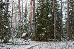 Miškininkai baiminasi pertvarkos: nebebus kam prižiūrėti miškų
