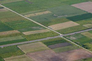 Paimamą žemę norima kompensuoti miškų plotais