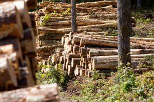 Vilniaus rajone medis mirtinai sužalojo darbininką