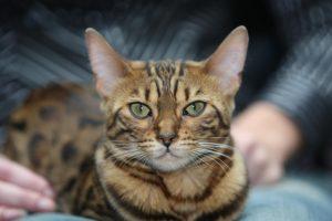 Katės ir rinkodara: kaip augintiniai padeda uždirbti milijonus?