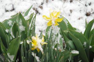 Šią savaitę dar gali pasitaikyti ir sniego