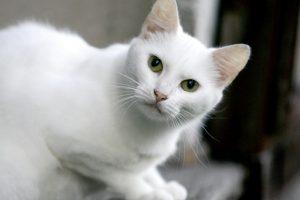 Gelbėtojai vadavo katiną iš mašinos variklio