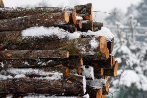 Siūloma įstatymais stabdyti nežabotą miškų išpardavimą