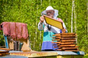 Šiemetinis medunešis bitininkų nedžiugina