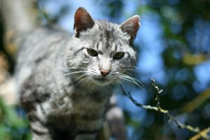 Klaipėdiečiams nusibodo kačių dainos