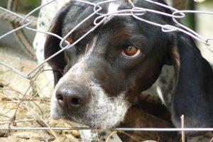 Už žiaurų elgesį su gyvūnais du seimūnai siūlo uždrausti juos laikyti
