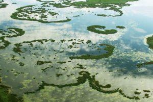 Žuvinto ežero labui – sudėtingas gamtotvarkos planas