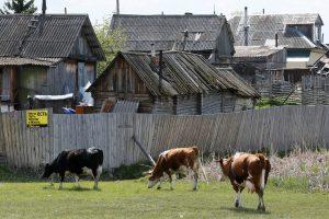 Rusai deportavo amerikietį, kuris svajojo apsigyventi Sibire
