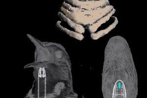 Iškasena parodė, kad dinozaurus rytais žadindavo paukščių balsai
