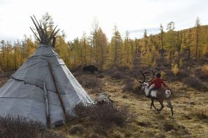 Mongolijos sužavėtas keliautojas: gyvuliai stepėse suvarinėjami motociklais
