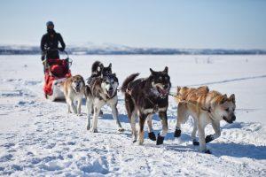 Pamatė kitokią Norvegiją: keliavo šunų kinkiniais