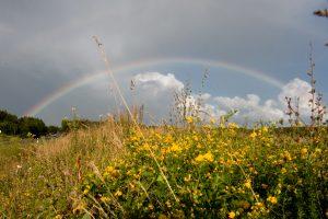 Birželio ir liepos sandūra džiugins šiltais orais ir lietumi