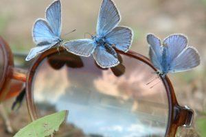 S. Paltanavičius: iki liepos vidurio gamtai labai svarbi ramybė