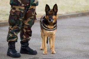 Naktis Muitinės muziejuje: tarnybinių šunų šou ir laboratoriniai tyrimai