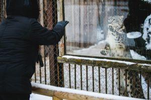 Lietuvos zoologijos sodo lankytojams – kalėdinė dovana