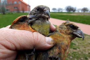 Paukščių – lyg vidurvasarį
