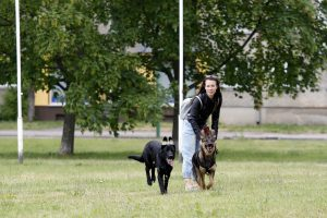 Danės skvere nuodija šunis?