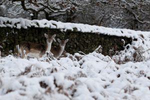 Didžiojoje Britanijoje sniegas vėl kelia sumaištį