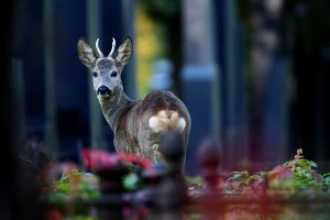 Per keturis dešimtmečius laukinių gyvūnų populiacija sumažėjo 60 proc.