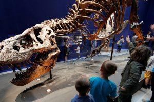 """""""Juros periodo parką"""" reklamuoja įspūdingas 67 mln. metų senumo tiranozauras"""