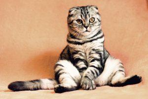 Veterinarijos gydytoja: sumažinti katino svorį padės keturios paprastos taisyklės