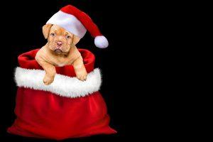 Specialistai siūlo susimąstyti, ar šuo – geriausia dovana po Kalėdų eglute
