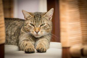 Nors katės toleruoja šilumą, jomis vasarą irgi reikia atidžiai rūpintis