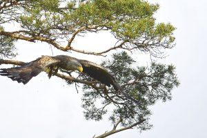 Gamtos fotografas R. Anusauskas pristato dokumentinį filmą
