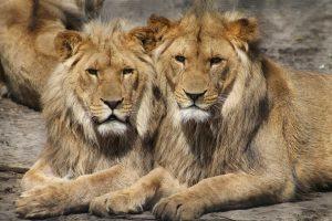 Vokietijoje iš zoologijos sodo pabėgo penki pavojingi gyvūnai