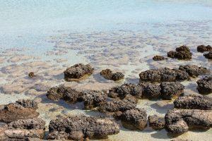 VU geologai: po masinio išnykimo egzistavo anomalios organizmų bendrijos